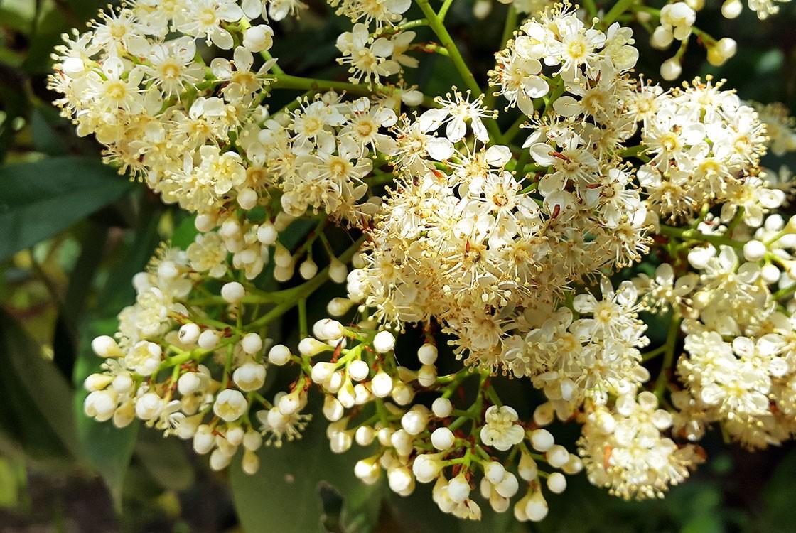 Flower-Burst_04